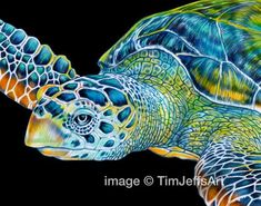 Items similar to Sea Turtle Colored Pencil Drawing 2 on Etsy Sea Turtle Species, Sea Turtle Art, Sea Turtles, Blind Contour Drawing, Chameleon Color, Underwater Art, Turtle Painting, Colorful Animals, Color Pencil Art