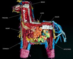Pinata Anatomy: Because whacking a piñata is hardly delicate surgery, we really just don't know what is truly inside. Carmichael Collective to the rescue with this rare glimpse at the anatomy of a piñata. Candy Castle, Phil Jones, Animal Science, Science Fair, Ag Science, Science Party, Forensic Science, Science Resources, Science Ideas
