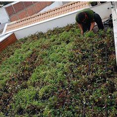 Melhor tecnologia de telhado verde do mercado. Faça já seu orçamento do RoofGreen 998135472 contato@vitoriagreen.com.br by vitoriagreen_paisagismo http://ift.tt/1Tpi592