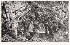 """"""" Parsifal """" 1.Aufzug 1.Bild 1882   Entwurf , Lichtdruck von H.Nisle nach M.Brückner"""