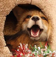 Fox Pictures, Funny Animal Pictures, Animals And Pets, Baby Animals, Cute Animals, Fox Pups, Happy Fox, Foxes Photography, Interesting Animals