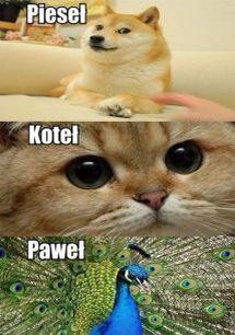 pieseł Funny Animals, Haha, Bird, Instagram Posts, Animal Humor, Funny, Ha Ha, Birds, Funny Animal