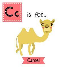 School Picture Frames, Flashcard, School Pictures, Camel, Teaching, Big, School Pics, School Photos