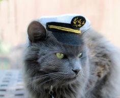Marine Captain Mini Hat by ToScarboroughFair on Etsy, $52.00   - If only I could get Chatty to wear this...