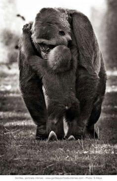 Maman gorille et son petit