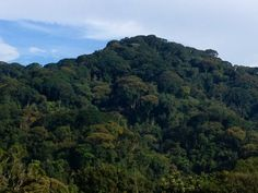 "NYUNGWE FOREST NATIONAL PARK --Chimps are the star attraction in Nyungwe, though they're not as readily watchable as the famed ""in the mist"" mountain gorillas farther north in Virunga National Park. Far easier to view are colobus monkeys. http://on.natgeo.com/1eauKbq"