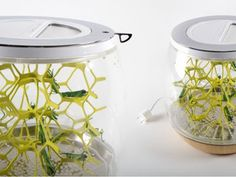 A tabletop terrarium for growing your own…edible bugs?