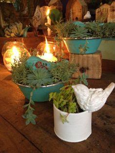 INSPIRAÇÕES NATALINAS !!! assistamaao video...a materia está maravilhosa  http://globotv.globo.com/rede-globo/bom-dia-sao-paulo/v/designer-usa-plantas-suculentas-para-fazer-a-decoracao-natalina/3016172/
