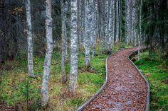 Autumn leaves on nature trail at Arctic Circle #autumncolors #autumn #arcticcircle #ig_finland #pgdaily #canon_photos #naturephotography  #visitrovaniemi #visitfinland #fotocatchers #special_shots #natgeo