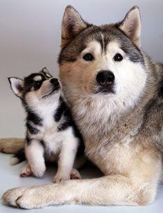 Animales sueltos - Comunidad - Google+