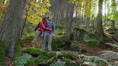 So gesund ist die Mühlviertler Waldluft - #Waldluftbaden im Granithochland. (©OÖ. Tourismus/Röbl) Bradley Mountain, Austria, Wellness, Exploring, Linz, Tourism, Woodland Forest, Health