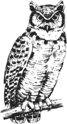 Patterns - Birds