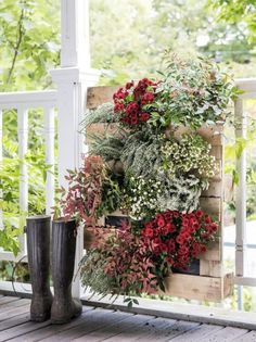 Vertical gardens are ideal if you have a small garden or balcony and still want plenty of greenery. they're popular as a spot for growing herbs and plants Home Grown Vegetables, Fall Vegetables, Planting Vegetables, Fall Plants, Foliage Plants, Fresco, Orange Plant, Chlorophytum, Garden Web