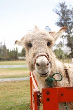 La Granja del Tío Mario Goats, Cow, Mario, Animals, Animales, Animaux, Animal Memes, Animal, Goat