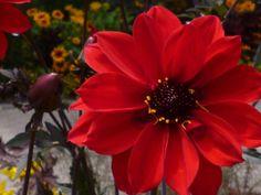 #Flower #Blumen #Garten #Garden