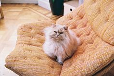 {best seat in the house} purr