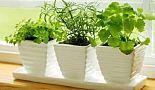 10 växter som attraherar positiva energier
