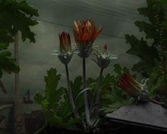 daniel-shipp-fleurs-01
