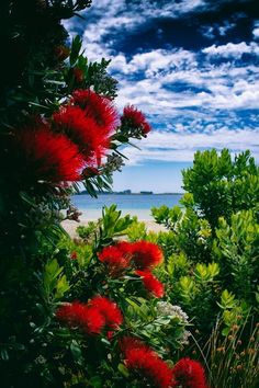 'pohutukawa tree' by firerae Beautiful Photos Of Nature, Nature Photos, Beautiful Landscapes, Beautiful Images, Beautiful Flowers, Boat Painting, Stone Painting, Scenery Pictures, Cool Pictures