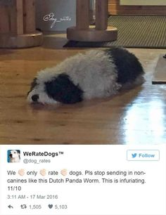 Not A Doggo: 22 Hilarious Tweets From We Rate Dogs