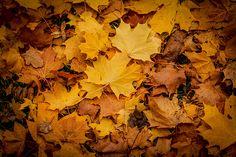 Autumn Floor October 2013, Flooring, Autumn, Website, Facebook, Twitter, Google, Photos, Painting