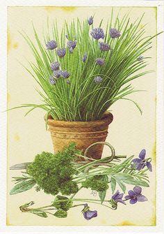 Marjolein Bastin postcard
