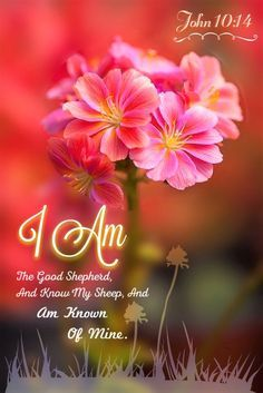The Living. John (KJV) -I am the good shepherd, and know My sheep, and am known of Mine. Biblical Quotes, Bible Verses Quotes, Jesus Quotes, Bible Scriptures, Spiritual Quotes, Scripture Art, Jesus Sayings, Gospel Quotes, Bible Teachings