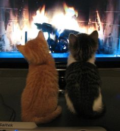 Adorable! Watching a virtual fire!