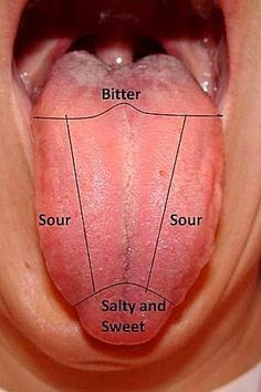 Map Of The Tongue Showing Different Taste Buds Yolandas Sensation
