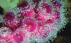 Edge Of The Plank: Cute Animals: Sea Anemone
