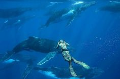 Tap image for travel information - Diving with Humpback Whales in Tonga  Travel information below    Vava'u Islands Tonga.  Jul-Oct for better whale watching.  @karimiliya to book a whale watching & swimming tour.  @matthew.reichel - Check them out for more awesome photos!   # Search for similar experiences by hashtag - #earthoffline #tongaoffline #wildlifeoffline