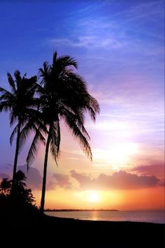 1587 Printed Beach Sunset Photo Backdrop with Palm Tree
