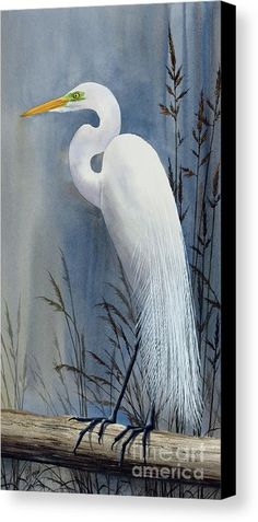 Egret Painting - Egrets Wonder by James Williamson Bird Painting Acrylic, Arches Watercolor Paper, Watercolor Paintings, Watercolors, Bird Paintings, Canvas Paintings, Bird Pictures, Pictures To Paint, Beach Art