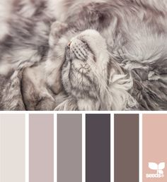 gray purple brown pink