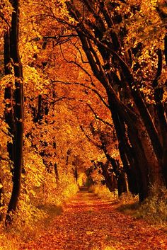 An Ethereal Enchantment - Beautiful Autumn Beautiful Places, Beautiful Pictures, Autumn Scenes, Autumn Aesthetic, All Nature, Autumn Nature, Autumn Fall, Fall Pictures, Fall Images