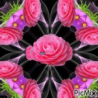 Kaleidoscoper rose Roses, Board, Flowers, Plants, Pink, Flora, Rose, Plant, Royal Icing Flowers