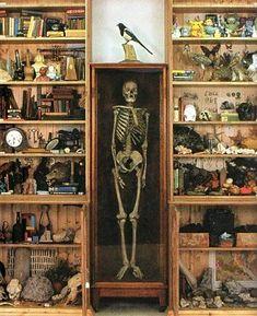 21 Images De Cabinet De Curiosites Contemporain Qui Font Envie En