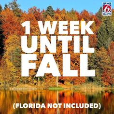 Florida Images, Florida Weather, News 6, Autumn, Fall, Instagram, Fall Season, Fall Season