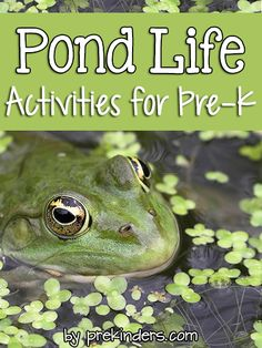 "Pre-K & Preschool theme ideas for learning about pond animals: frogs, turtles, fish. Find more Pond Activities for Pre-K on the category page. Books Check here for a complete list of Books about Pond Animals! Turtle Crawl {Large Motor} Children crawl like a turtle with a ""shell"" (foam mat or carpet) on their backs, trying not to lose the shell. Frog Hop {Large Motor} Children move from one point to"