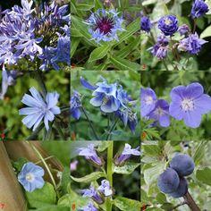 Flora Garden, Garden Plants, Blue And Purple Flowers, White Gardens, Fungi, Beautiful Gardens, Cactus, Spring, Summer 3
