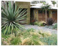 contemporary landscape by debora carl landscape design Drought Resistant Landscaping, Drought Tolerant Landscape, Modern Landscaping, Backyard Landscaping, Yucca, San Diego, Front Yard Design, Roof Design, Bed Design