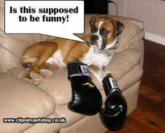 Is this why they're called Boxers :)