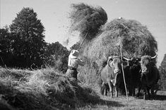 Paysans en France - Moissons en 1935 - © Gaston Paris / Roger-Viollet