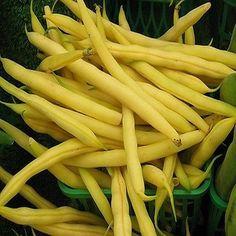 50+ Bush Bean Golden Wax Vegetable Seeds , Under The Sun Seeds