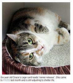Cat Wisdom 101 | Amazing Grace, The Coliby Cat