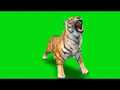 Lion Background, Paint Splash Background, Green Background Video, Smoke Background, Black Background Images, Background Images Wallpapers, Editing Background, Lights Background, Free Green Screen Backgrounds