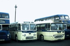 Bluebird Buses, Coaches, Modern, Trainers, Trendy Tree