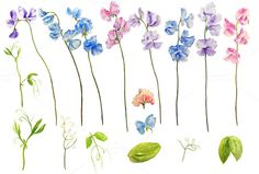 Check out Watercolor Clipart Sweetpea by Corner Croft on Creative Market?u=chengjing Sweet Pea Tattoo, Watercolor Red, Watercolor Flowers, Watercolor Paintings, Flower Tattoo Designs, Flower Tattoos, Art Tattoos, Tatoos, Yellow Roses