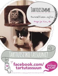 Kodittomat kissat Hugo ja hänen adoptioveljensä Sisu painivat mielellään.