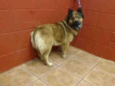 A3947832 Luna 6 y.o. County of Los Angeles Department of Animal Care and Control-Our Animals-Our Animals Search Detail